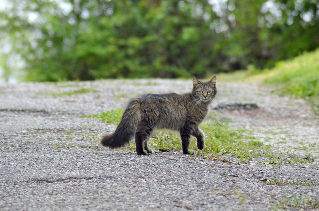 CITY---Feral-Cats--1.jpg