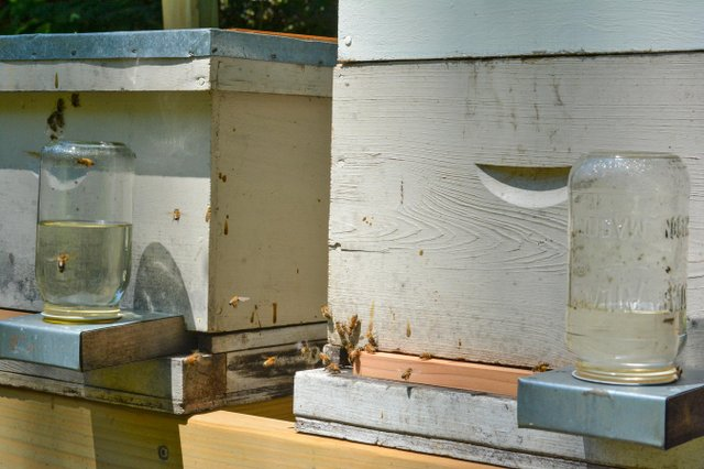 Bees at St. Stephens