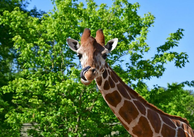 VL-COMM-BRIEF-Bham-Zoo.jpg
