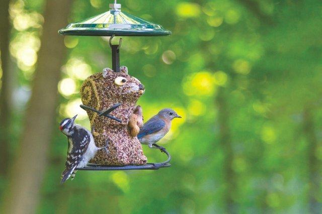 FHG_Wild-Birds-Unlimited.jpg