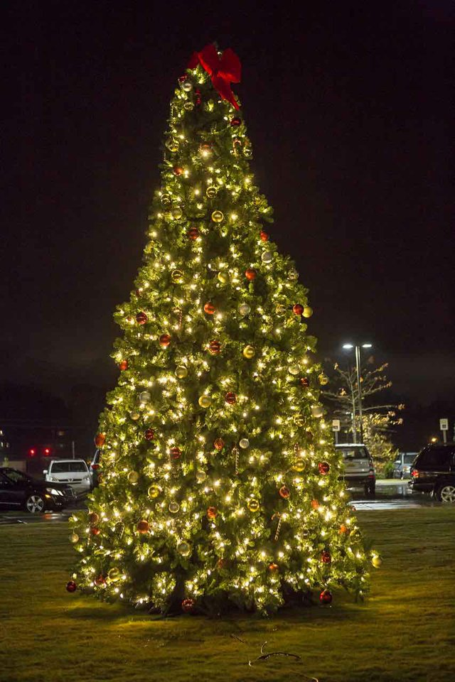 Vestavia Tree Lighting - 10.jpg