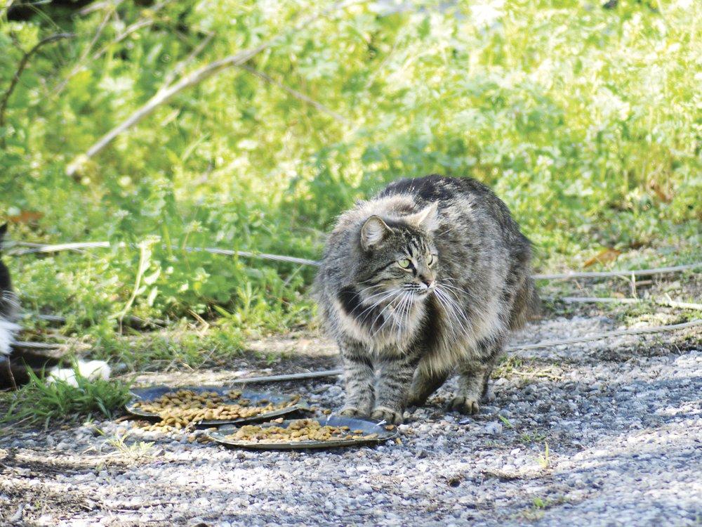 VV-Feral-Cats.jpg