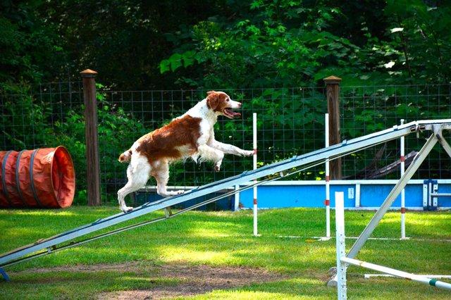 0714 Dog trainer