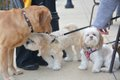 Paws on the Patio - 13.jpg