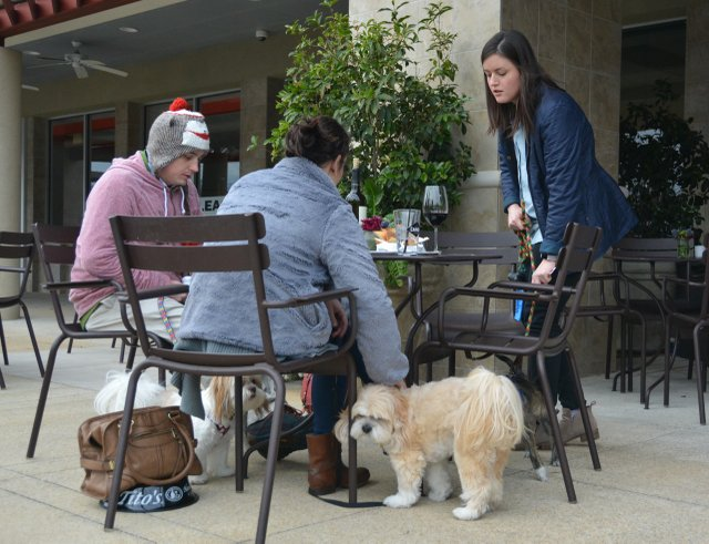 Paws on the Patio - 8.jpg